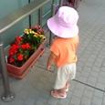 花を愛でるちびりん2。